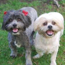 Kukla & Ollie