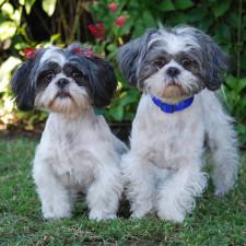 Moxie and Rocky