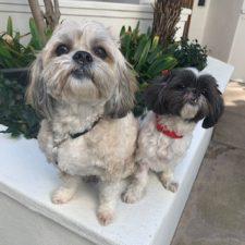 Rocco & Lali